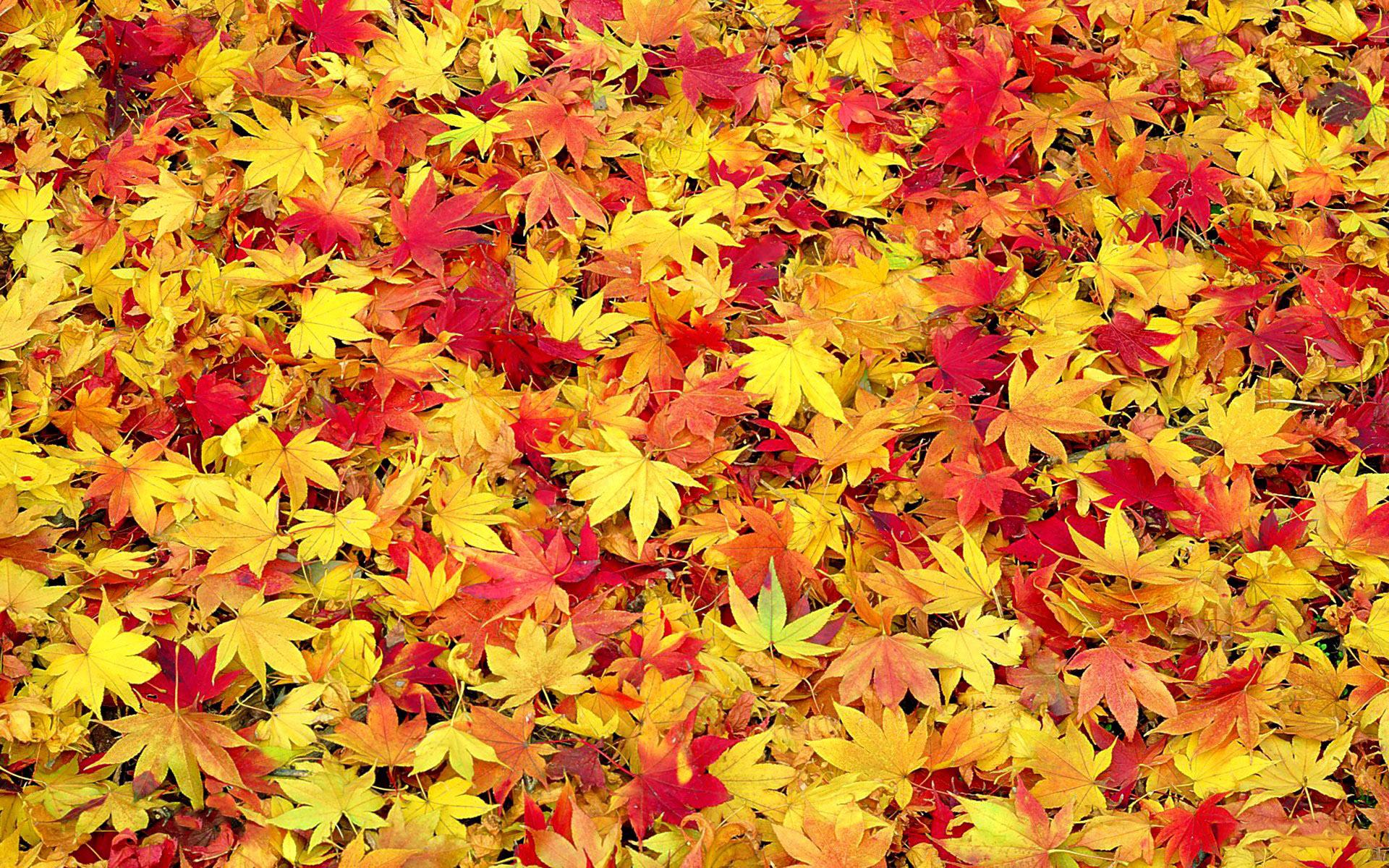 Осенние листья png фото скачать.