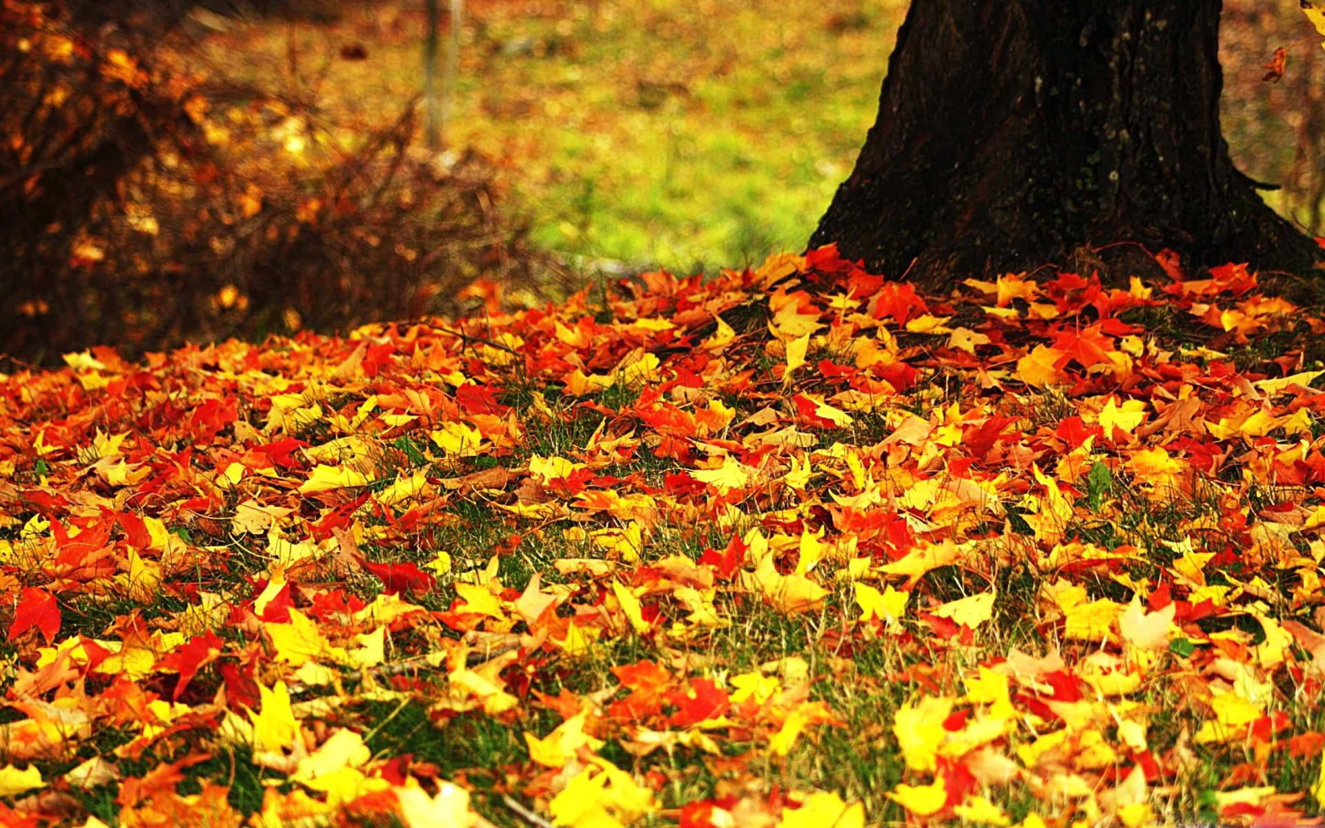 фото опавшие листья