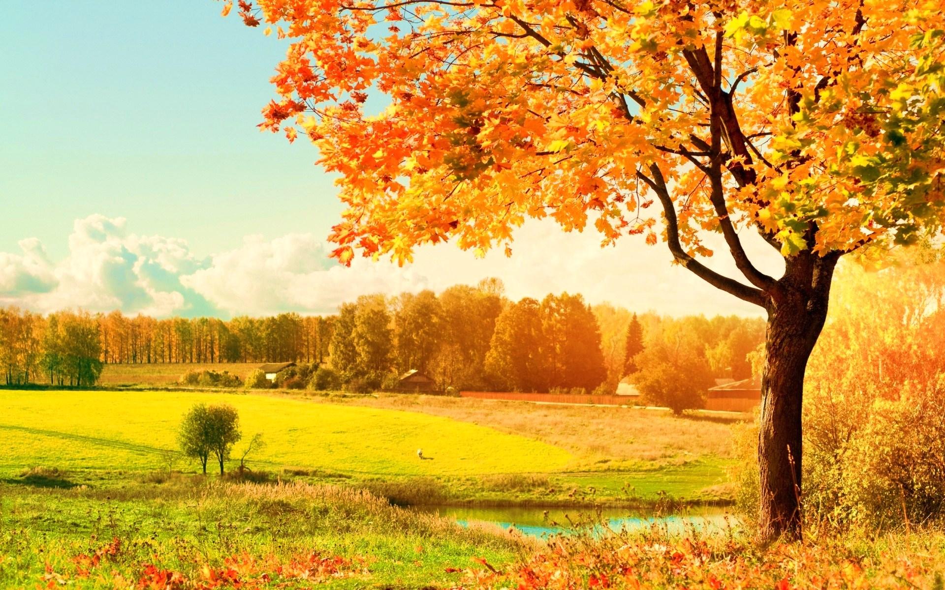 пейзаж фото осень