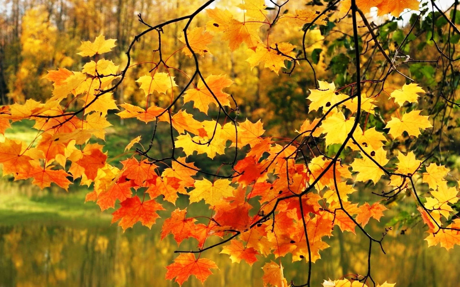 Осенняя окраска листьев осенние листья пнг 2451*2484 прозрачный.