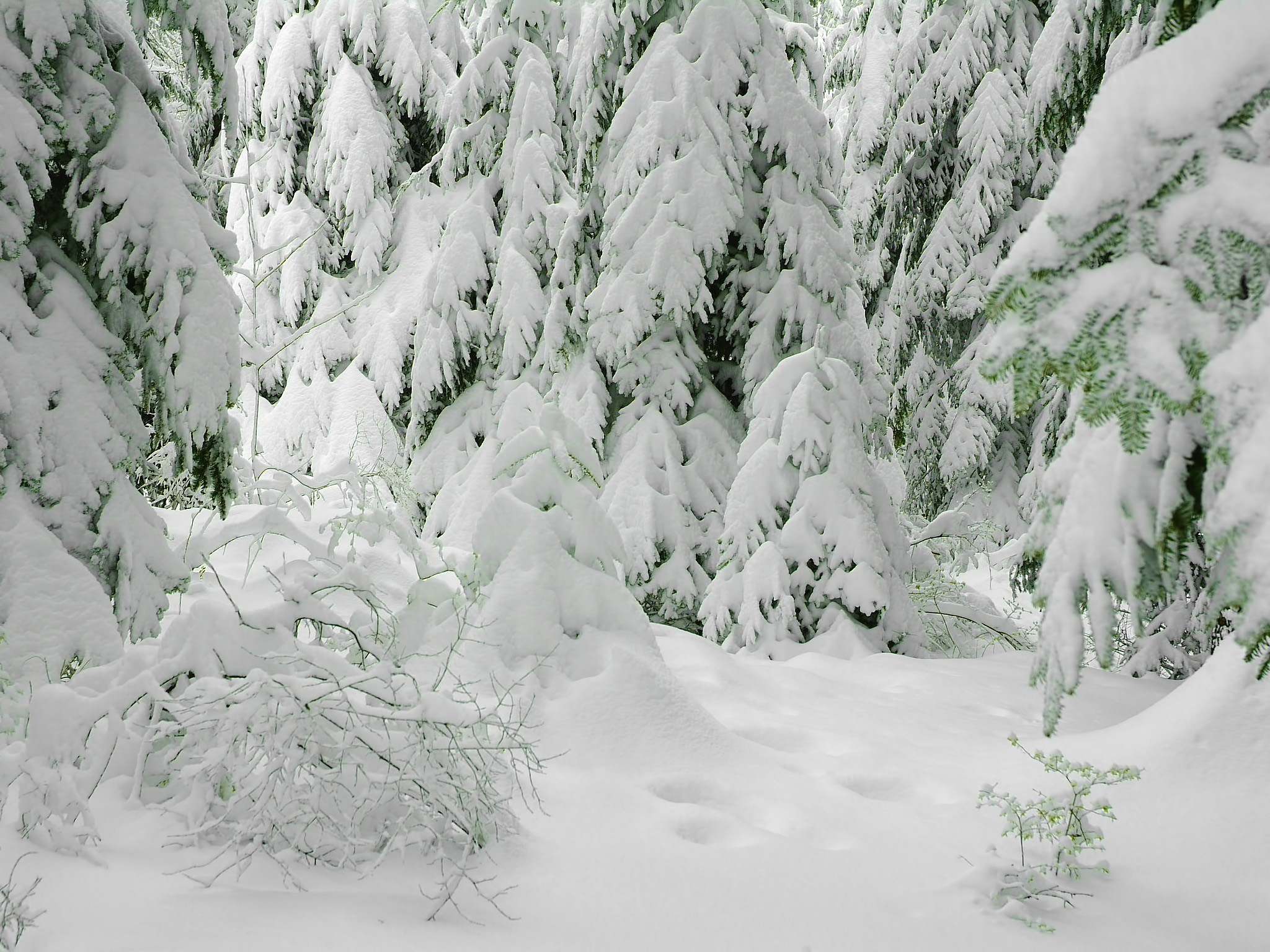 Зима зима природа картинки