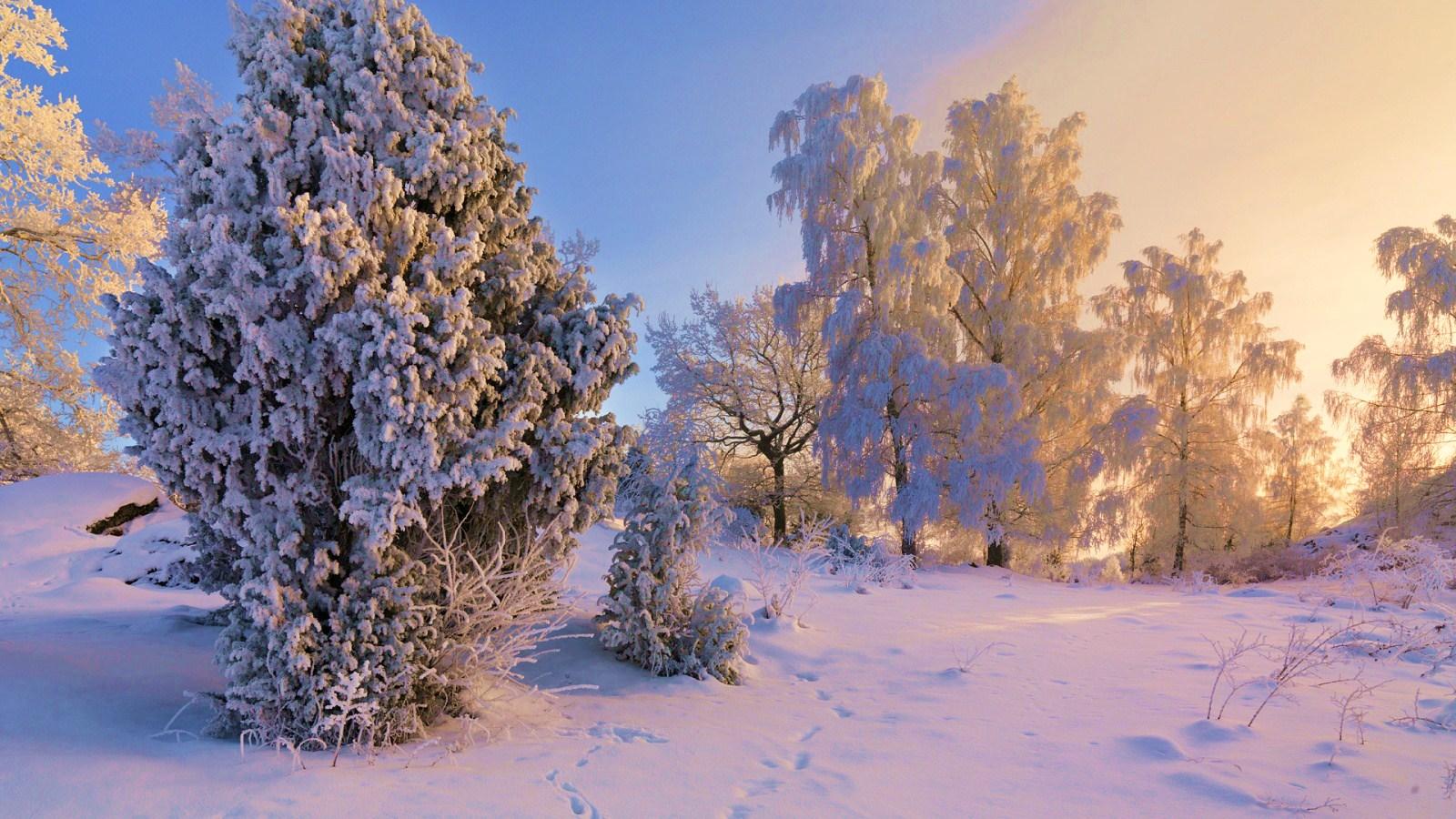 Зима зима природа картинки 24