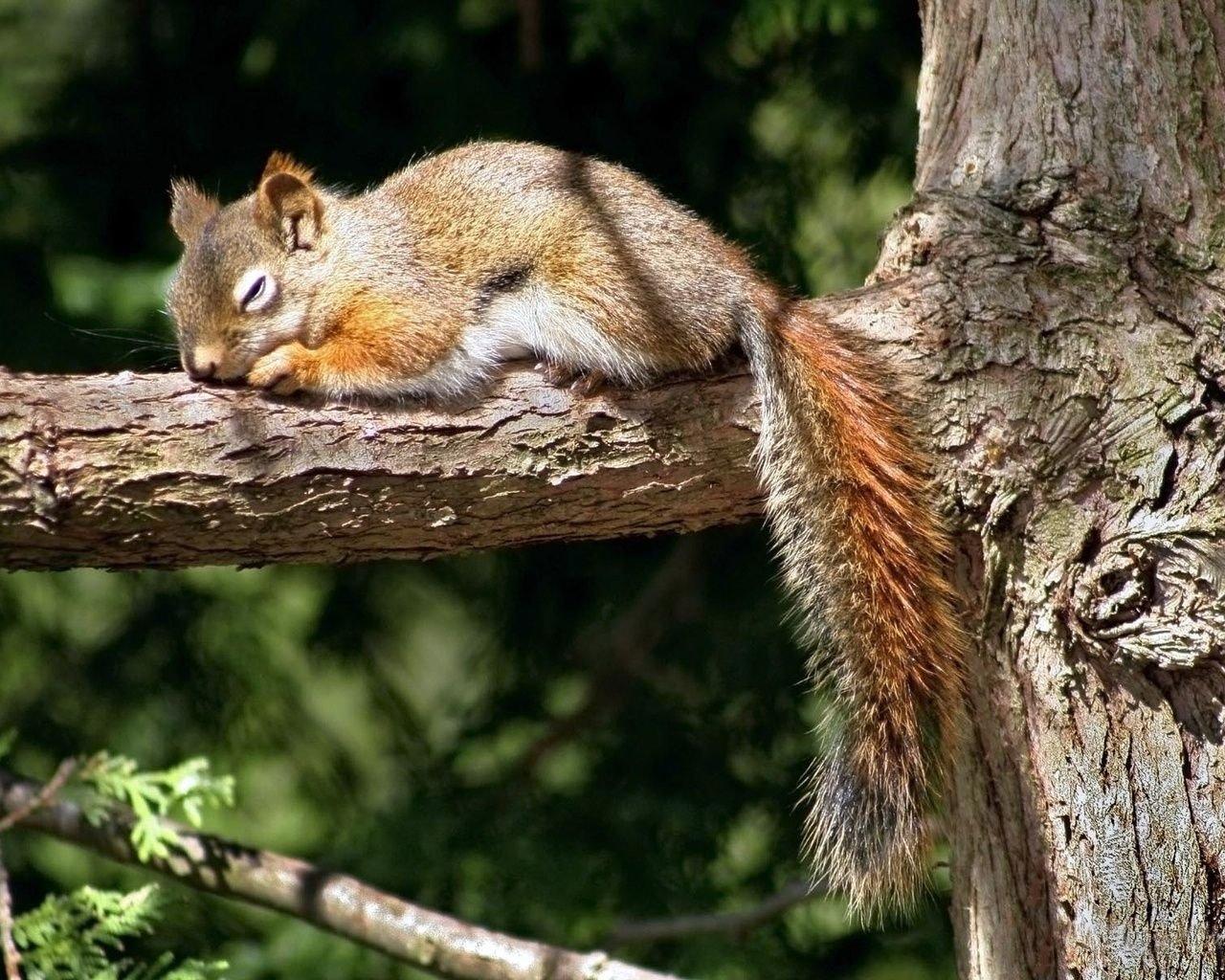kartinki24_ru_animals_squirrels_0032.jpe
