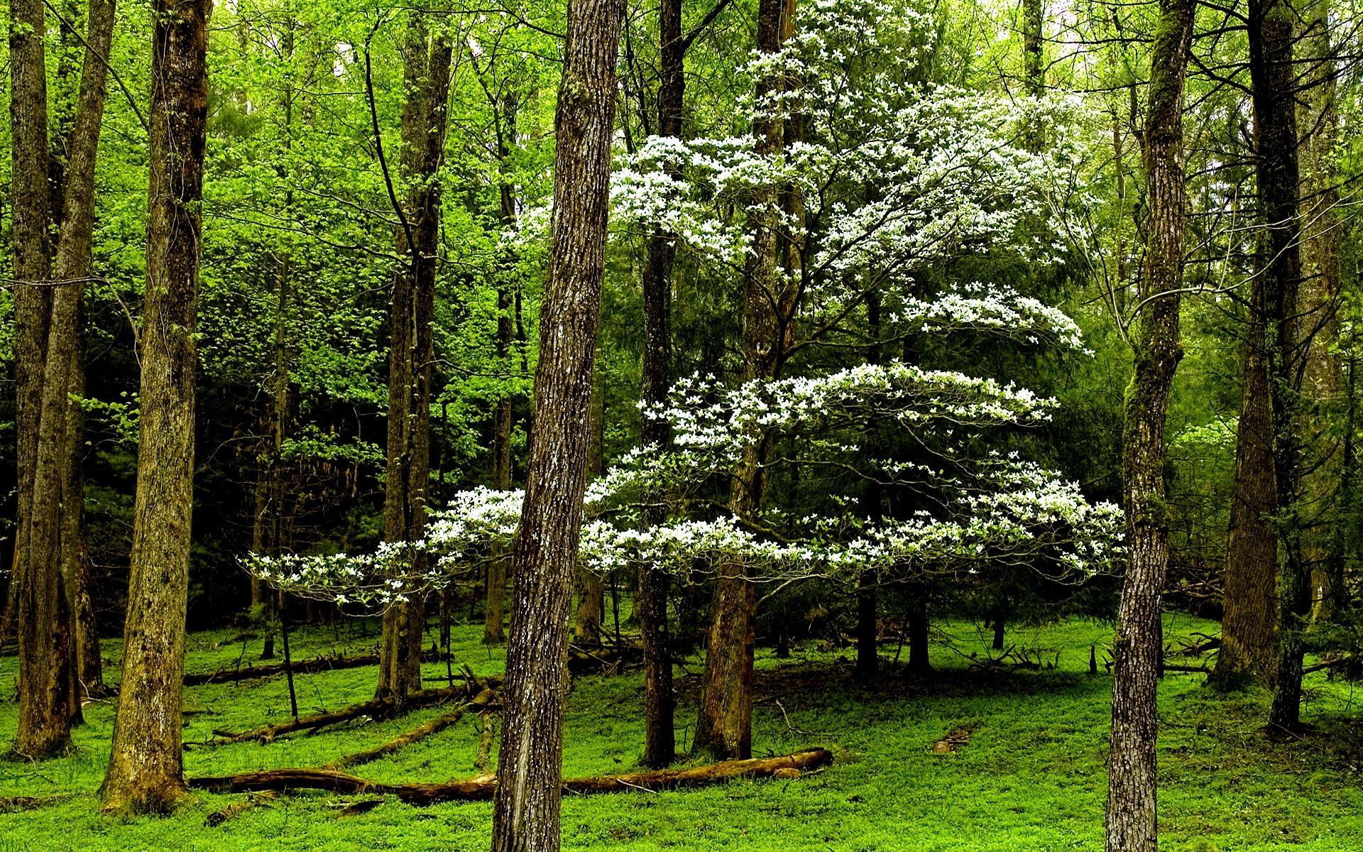 Звуки весеннего леса скачать бесплатно без регистрации