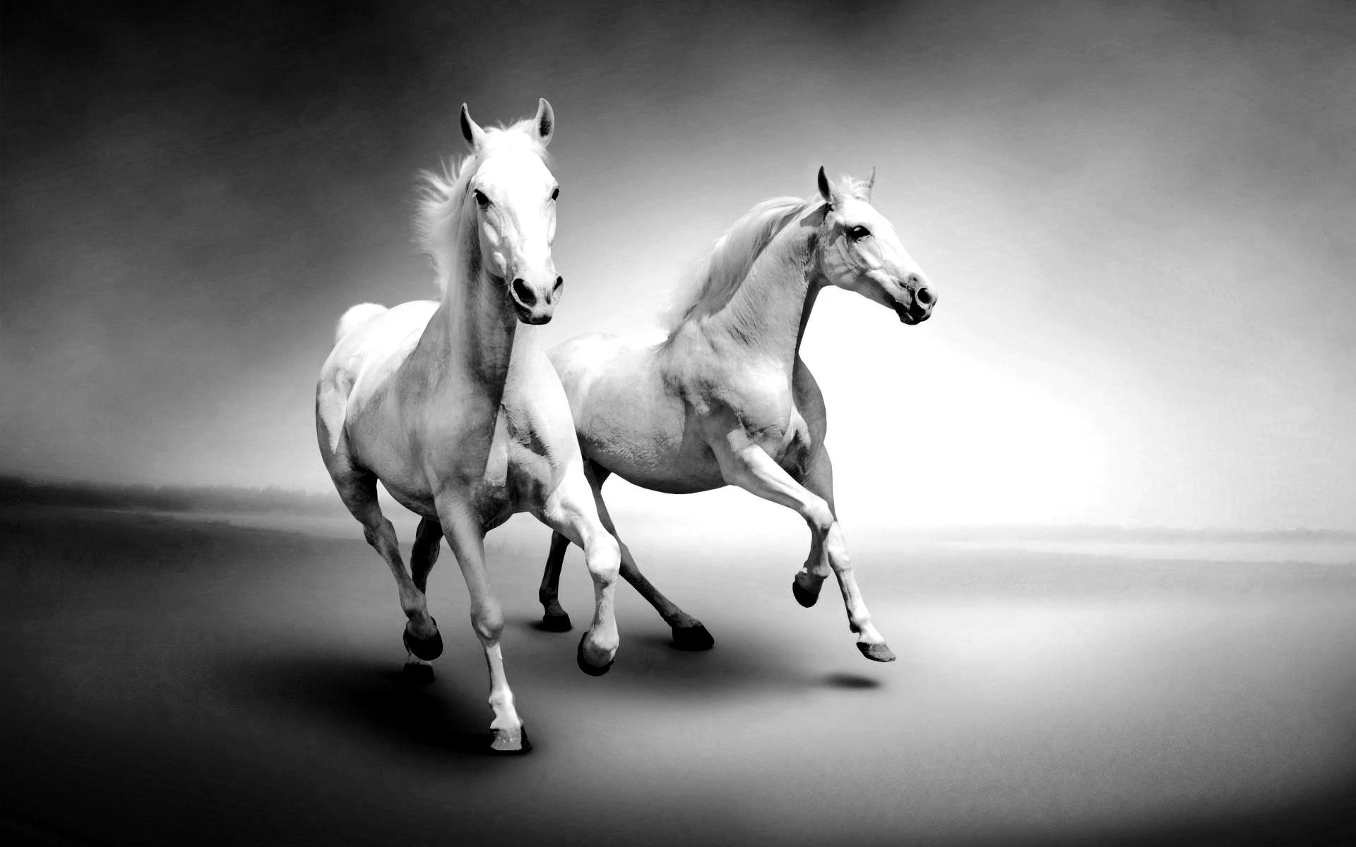 черно белые картинки лошадь