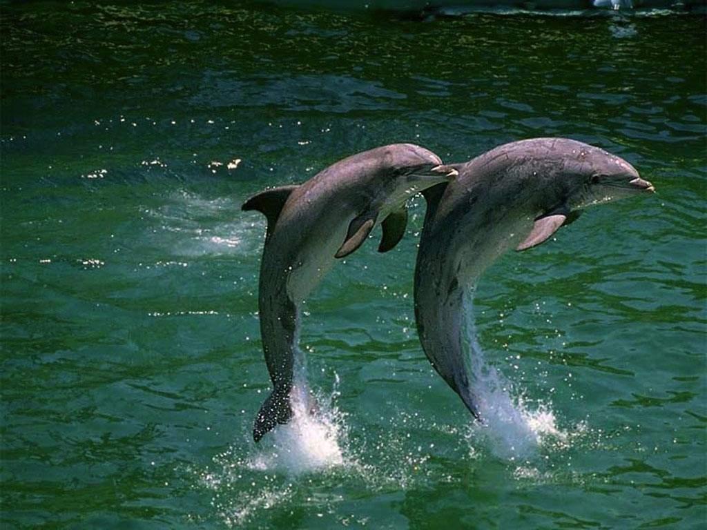 игры шоу дельфинов