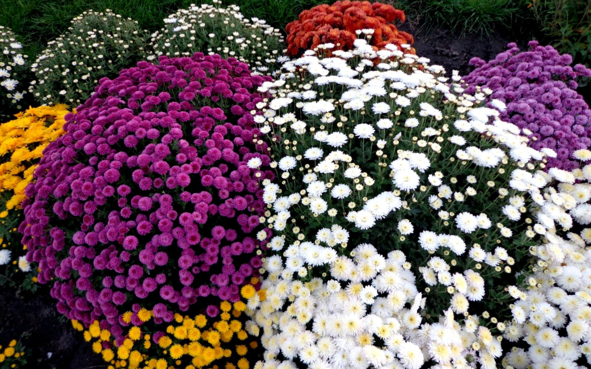Многолетние розы и цветы фото и названия
