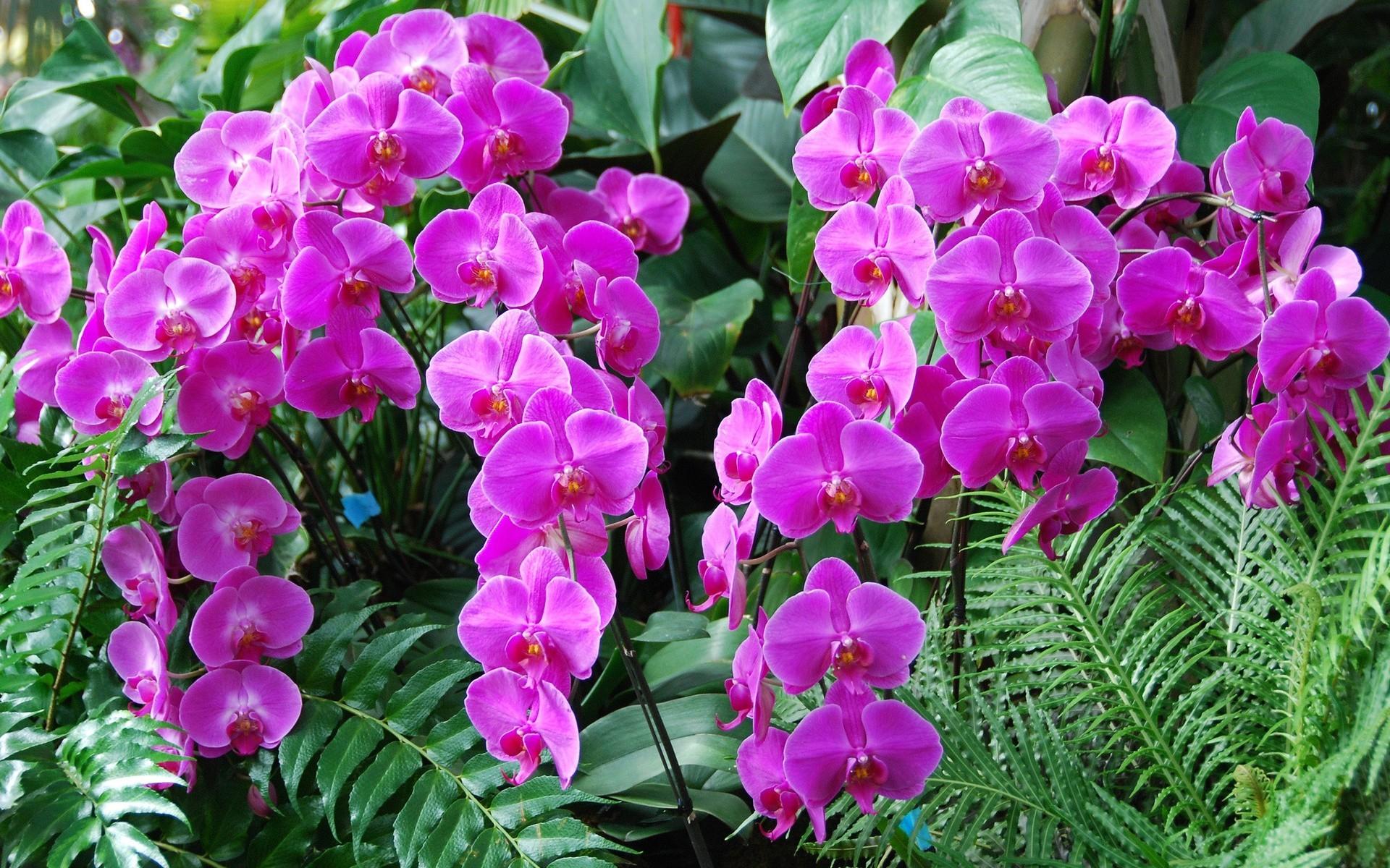 Рабочий стол обои орхидея