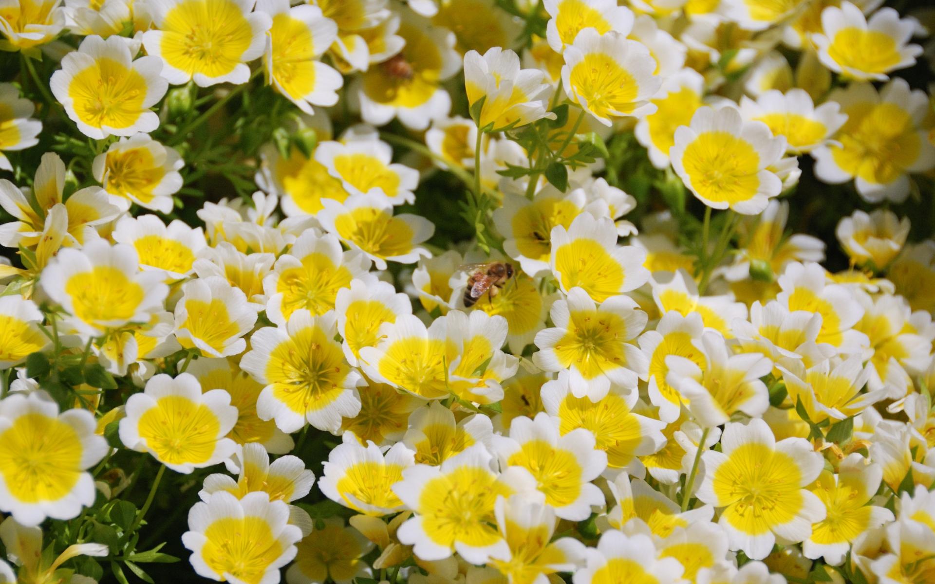 Полевые Цветы Изображения  Pixabay  Скачать бесплатные
