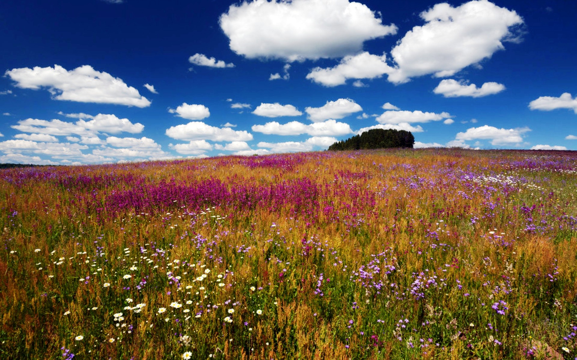 Картинки фото поле с цветами