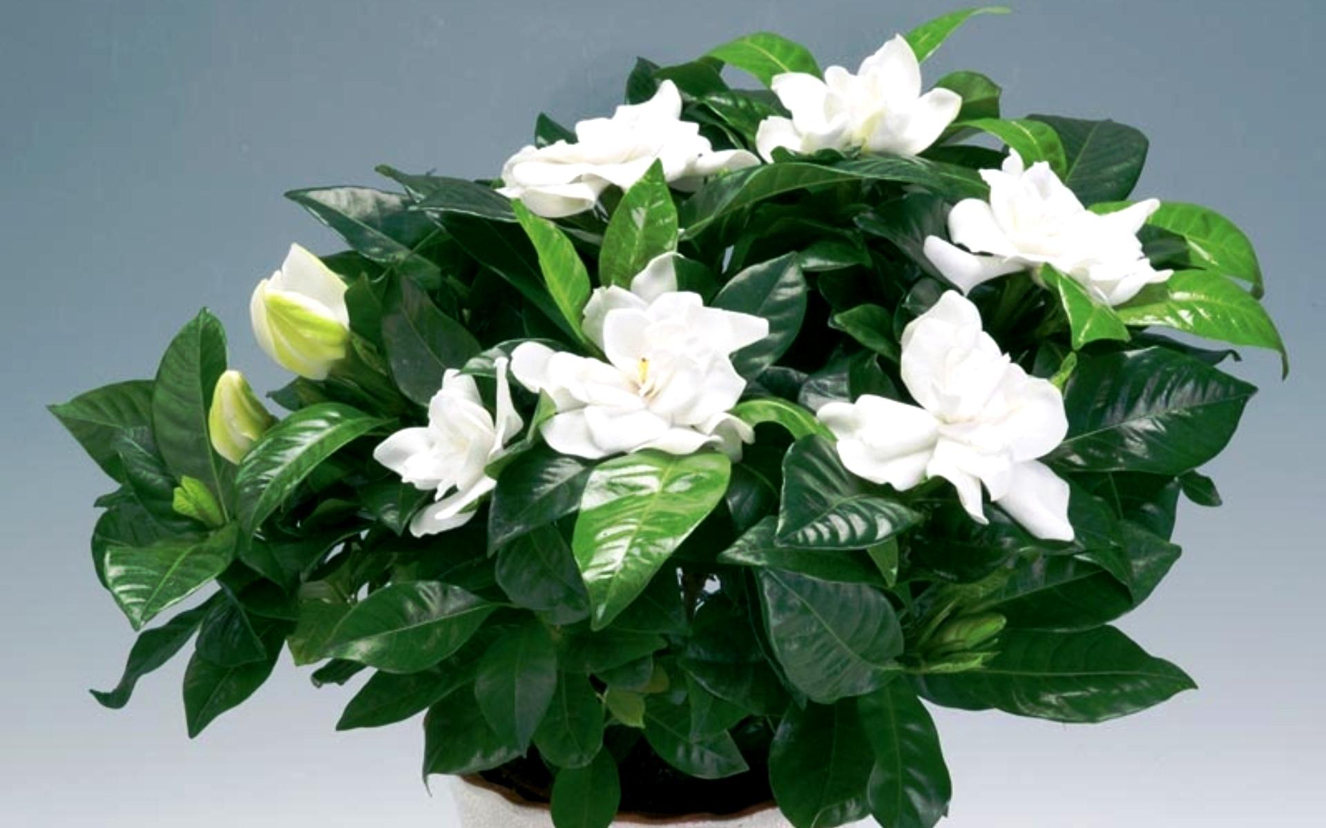 Цветы, цветущие 23