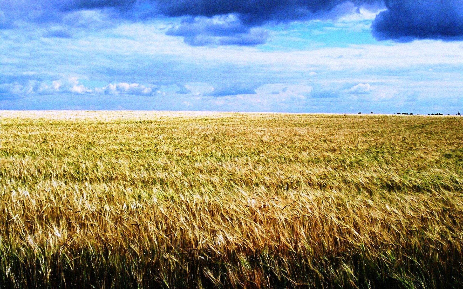 Фото хлебное поле