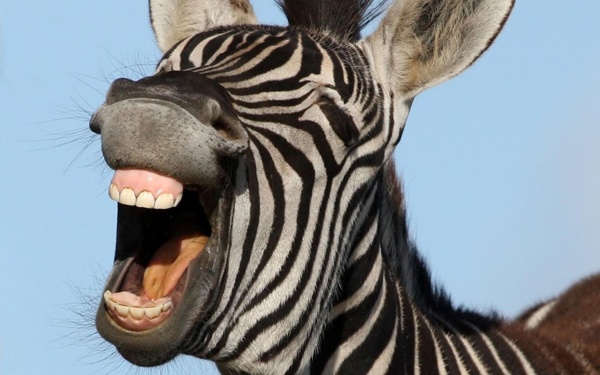 Oddfiles - Girafe rigolote ...