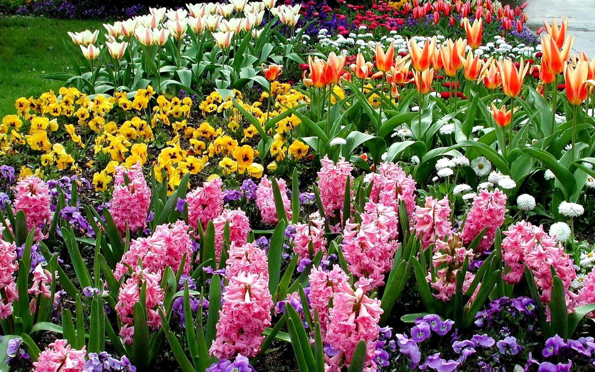 Картинка Весенние цветы на клумбе » Весенние цветы » Цветы ...