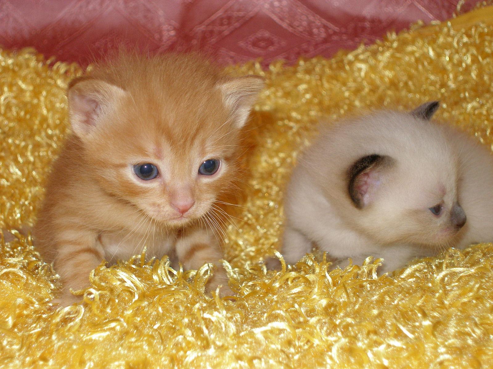 фото маленькие котятки