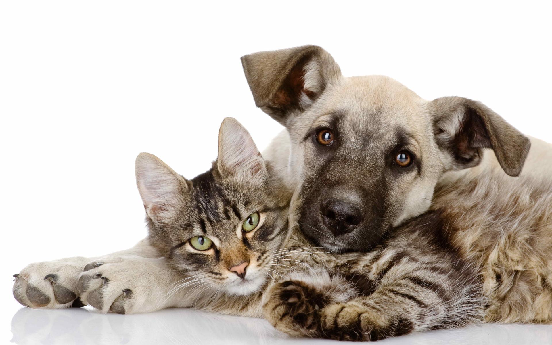 Картинка Кошка и собака » Кошки » Животные » Картинки 24 ...