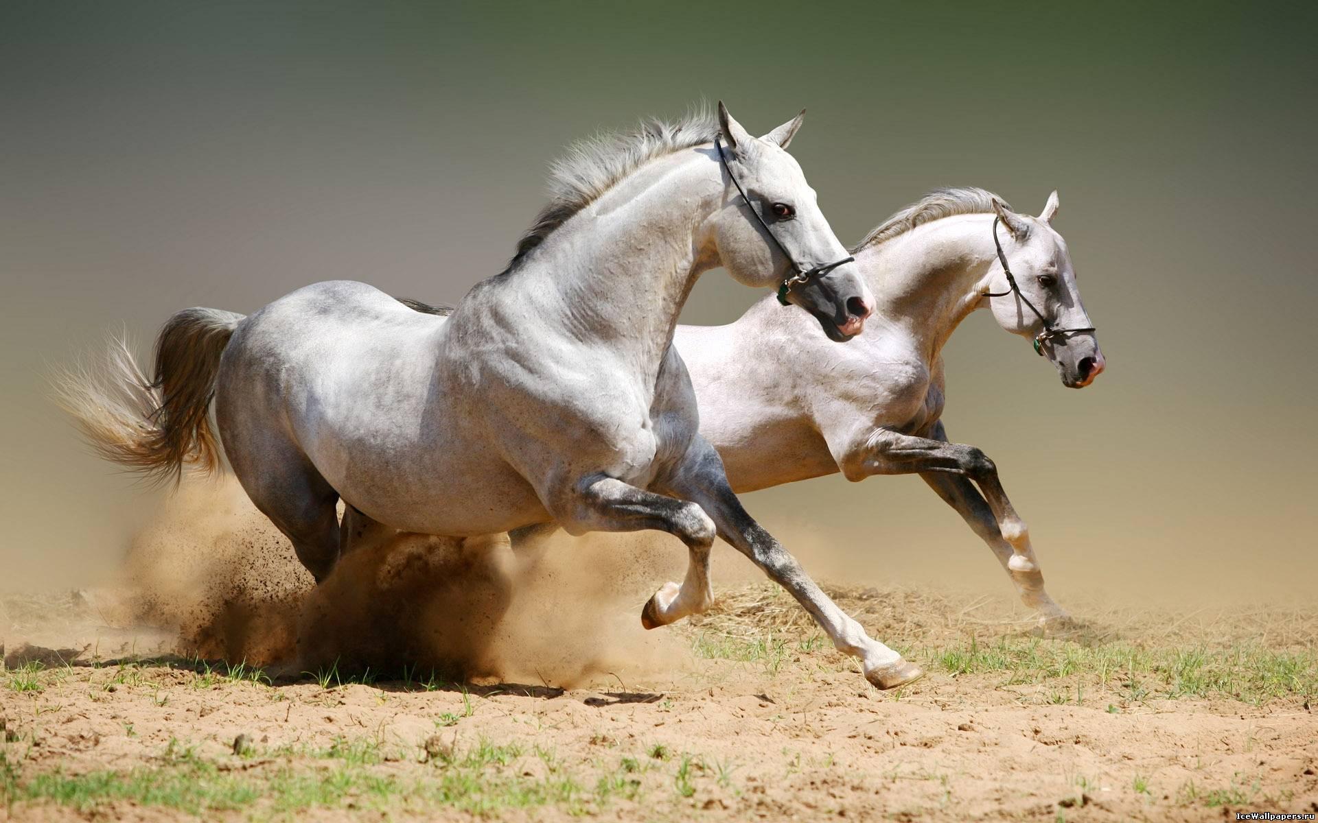... Животные » Картинки 24 - скачать: www.kartinki24.ru/kartinki/horses/3035-kartinka-17.html