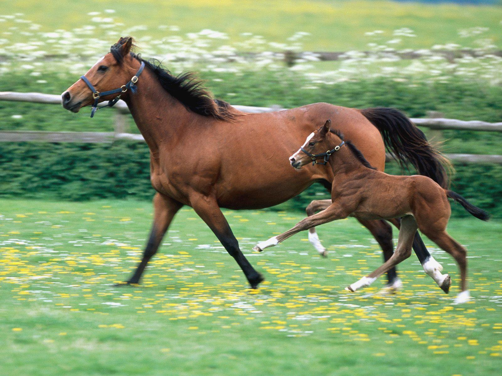 картинки про жеребят и лошадей