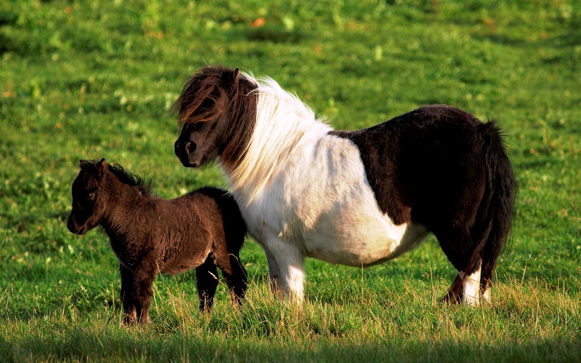 игры 3d лошади