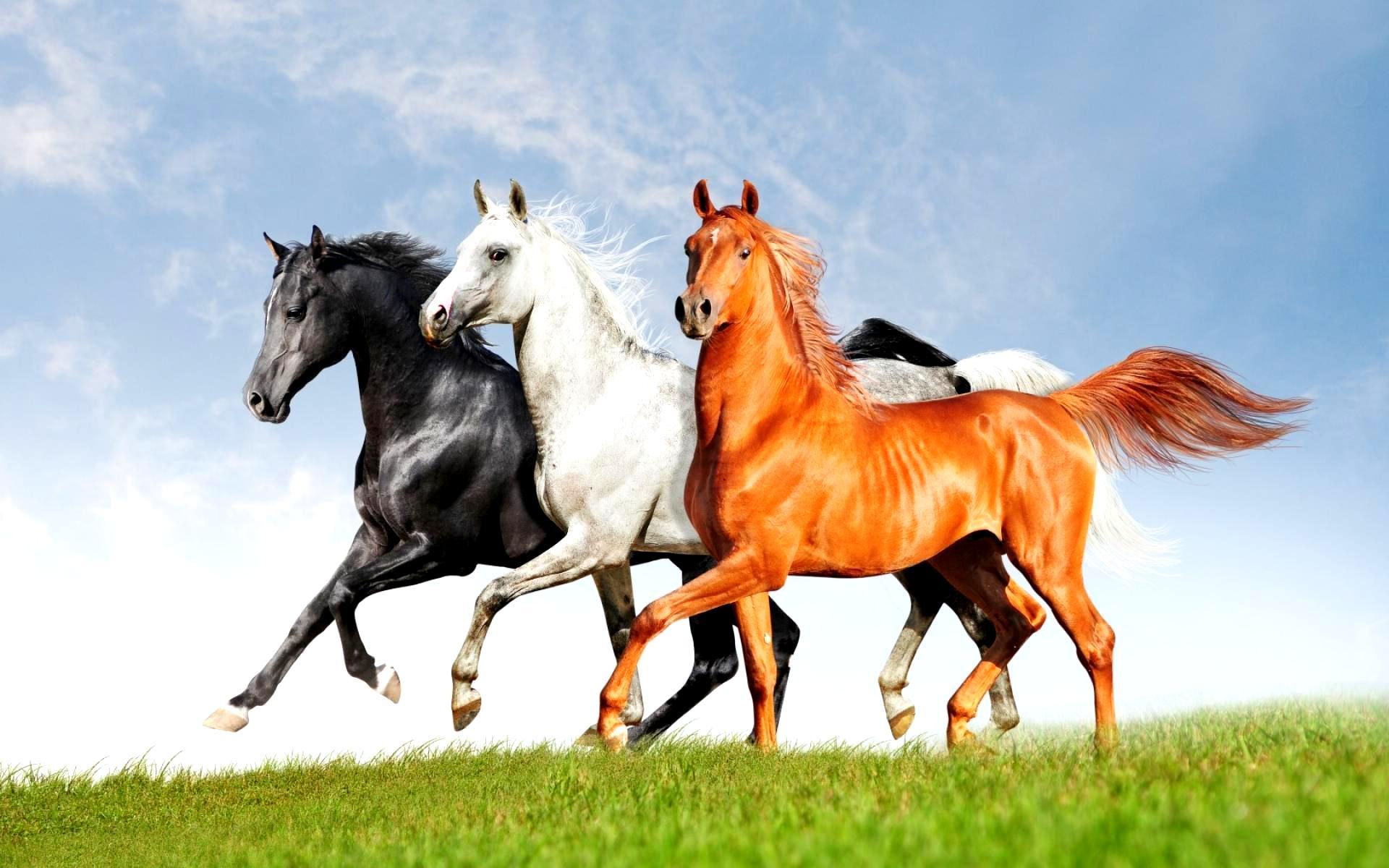 скачать картинки лошадей