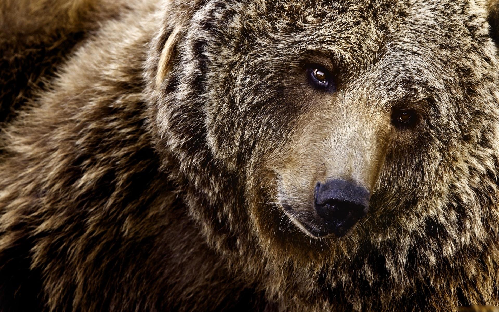 картинки медведя прикольные для детей
