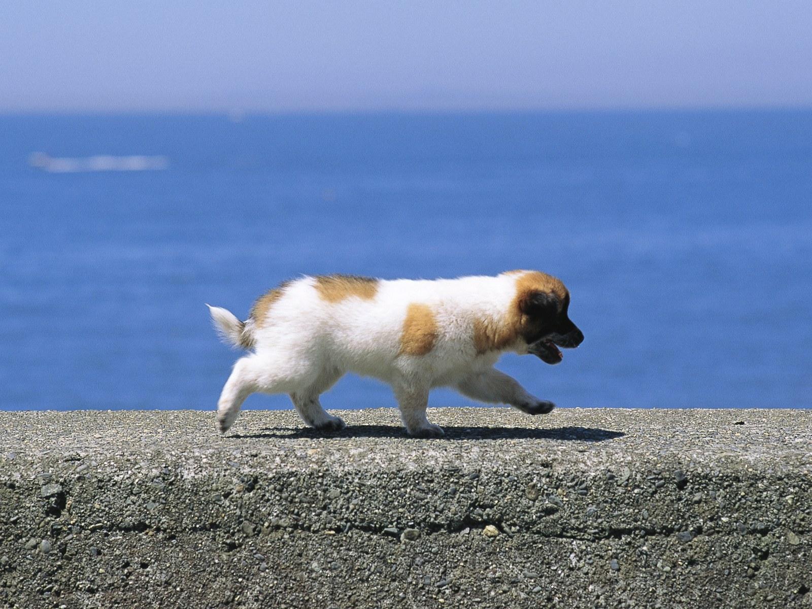 Скачать бесплатно картинку собака