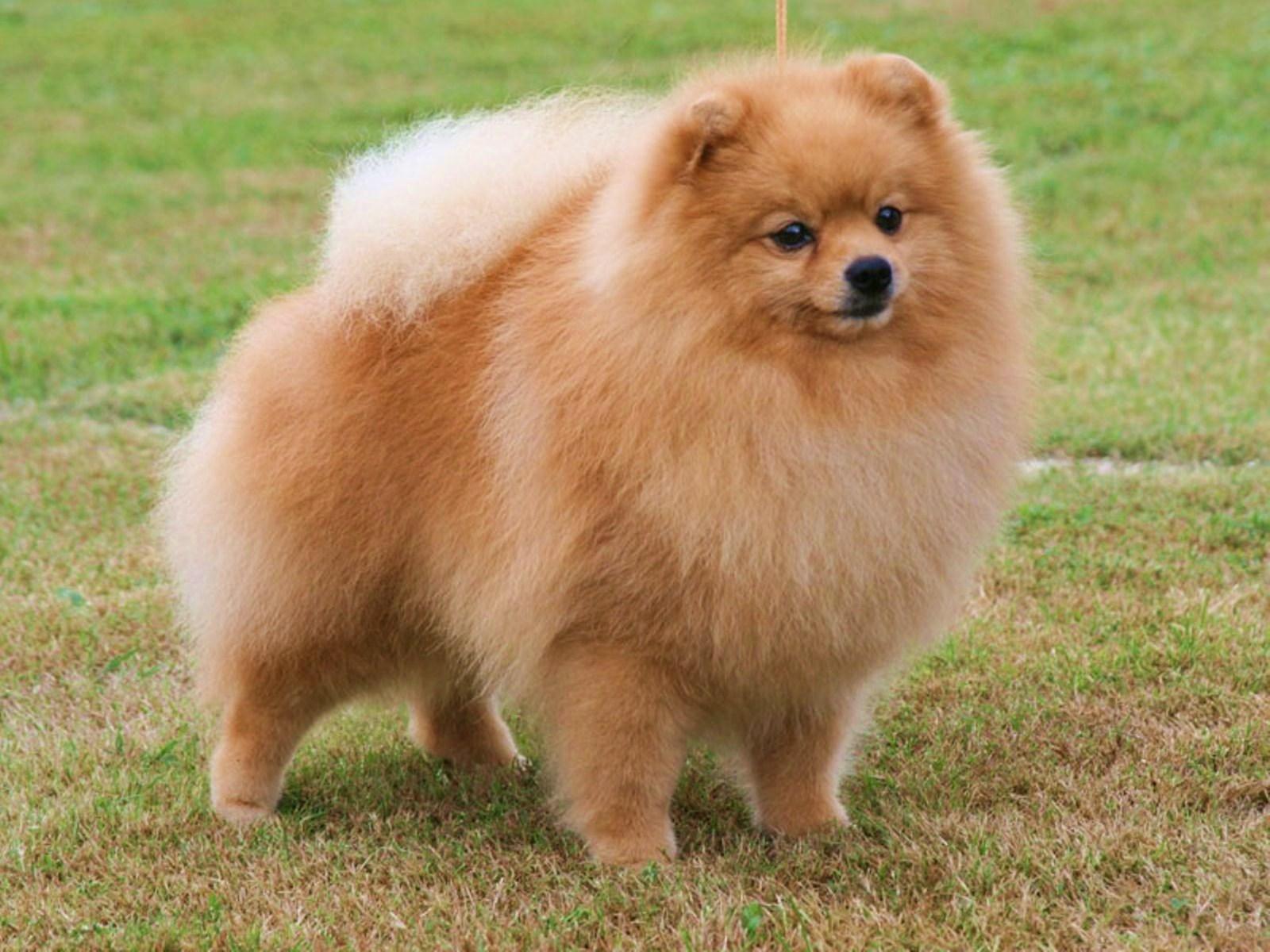 Самые умные породы собак Топ26 с фотографиями
