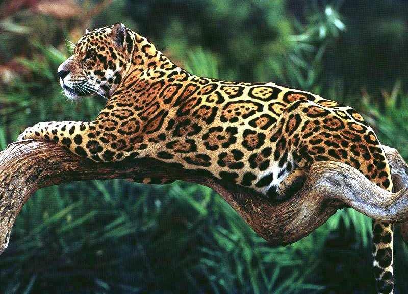 Фото картинки с животными