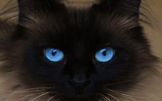 Голубые глаза угольной кошки. <br /><strong style=