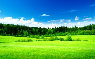 Поле лес зеленый