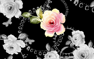 Розы на черном