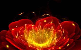 Красный цветок абстрактный