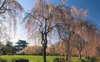 Цветущий парк в японии