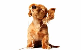 О эта музыка музыка музыка!
