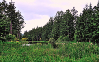Лес речка камыши
