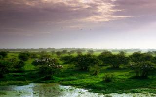 Кеоладео - национальный парк Индии