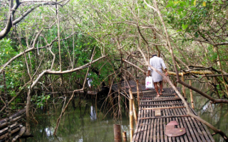 Мангровые заросли на юге Индии