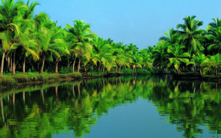 Природа в индийском штате Керала