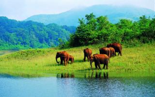 Слоны в национальном парке Индии