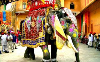 Украшенный индийский слон