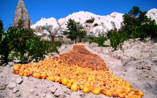 Турция. Так сушат абрикосы в Каппадокии