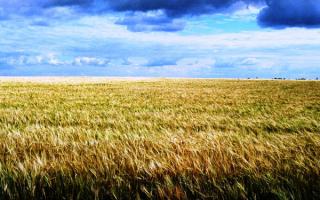 Россия. Хлебное поле