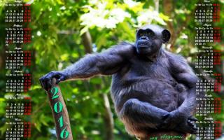 Календарь 2016 год обезьяны