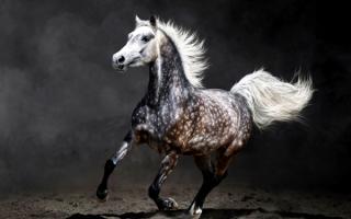 Лошадь мчится