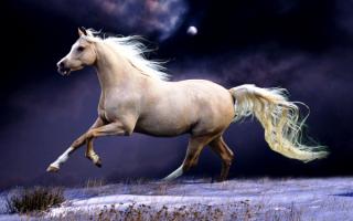 Лошадь скачет по снегу