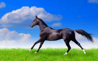 Лошадь на зеленой лужайке
