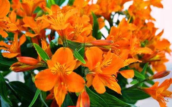 Нокиа оранжевая фото участвует