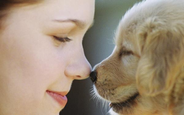 Картинка Собака друг человека » Приколы » Картинки 24 ...