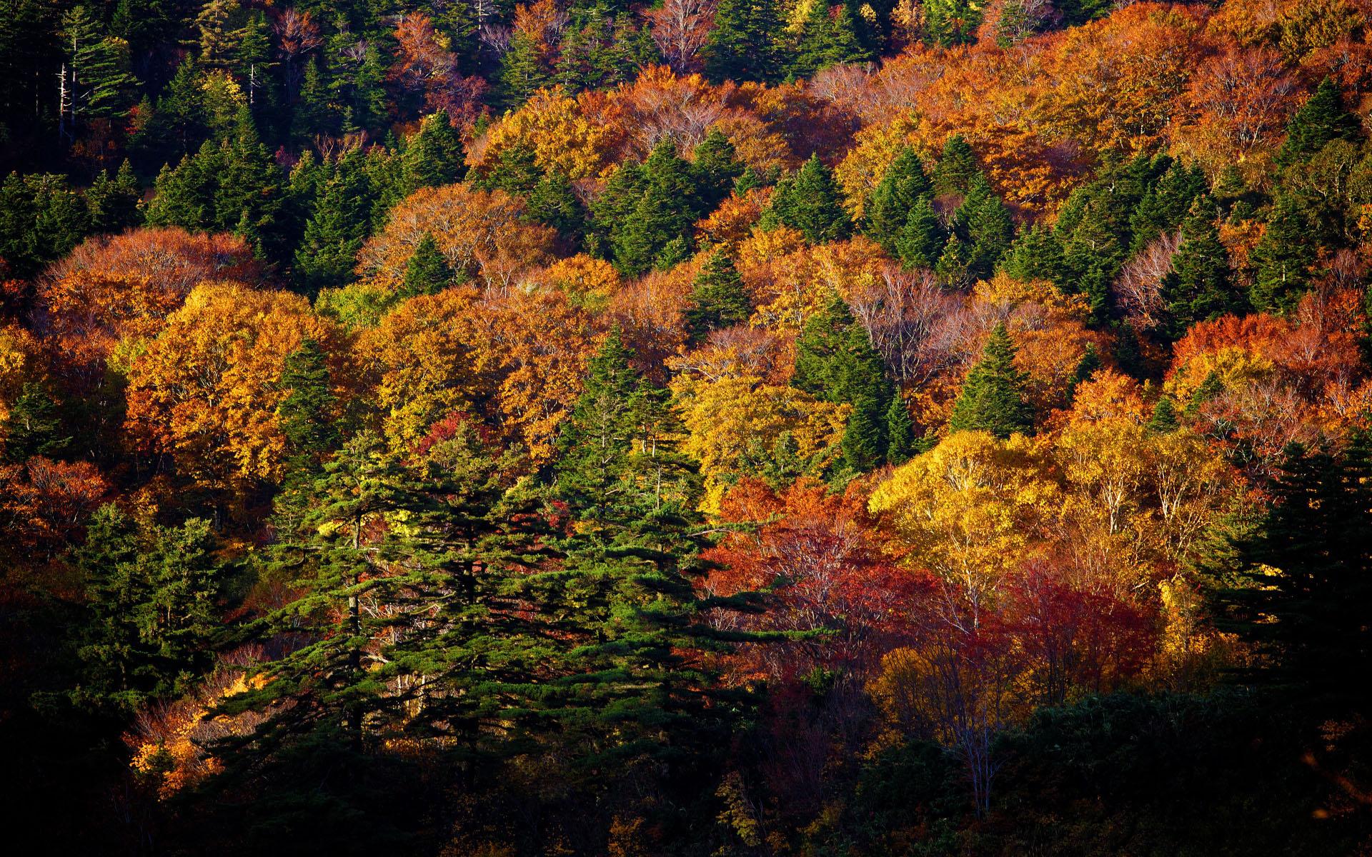 Картинка Осень в смешанном лесу » Лес » Природа » Картинки ...