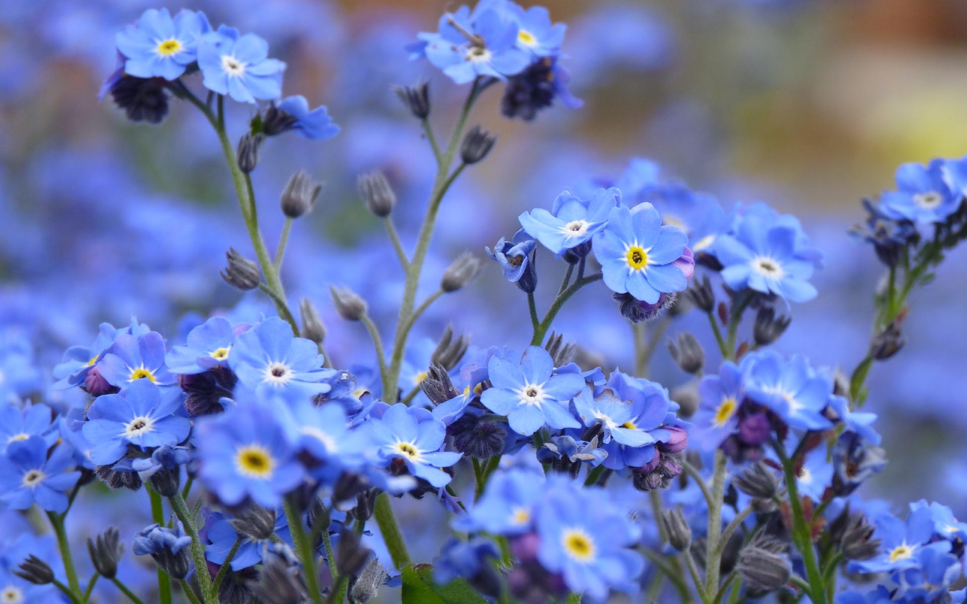 http://www.kartinki24.ru/uploads/gallery/main/36/kartinki24_flowers_0194.jpg